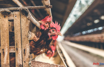 China finds Potential human case of H10N3 bird flu strain