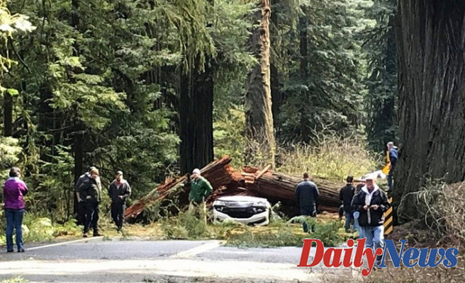 California Mother and Daddy of 5 killed when 175-foot redwood tree crashes on Automobile: report