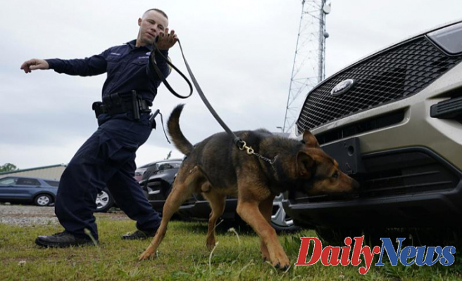 Considering That the nose does Not know Bud is Currently legal, K-9s retire
