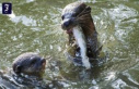 Movement of sperm: Otter instead of eels