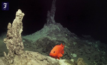 Hyrothermalquellen discovered: Before the Island, the sea floor is Smoking