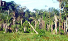 More than in South America: Africa is a Hotspot of deforestation