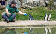 Zoos in the review: experience and education