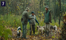 Rotation in the Piedmont: a journey into the realm of the truffle hunter