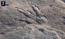 When you walk: a four-year-olds in Wales dinosaur finds footprint