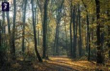 Frankfurt-Schwanheim: Three sexual Assaults in broad daylight