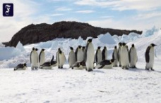 Assumption confirmed: New penguin colonies discovered in Antarctica from space