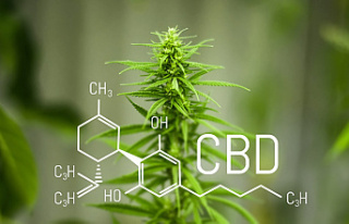 5 Reasons Why CBD Has Become So Popular