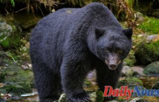 Colorado Girl found dead Close home from Obvious bear...