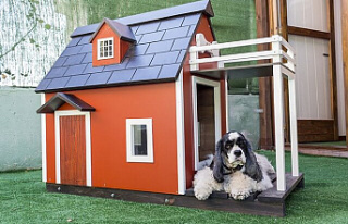 What to consider when building a doghouse