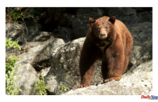 California Teenager who Pushed bear to Rescue dogs'I...