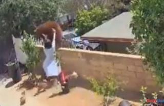 Video Reveals teen girl Pushing huge bear over Fencing...