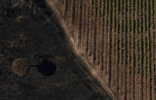 After French wildfire decimated grapevines, vintners...