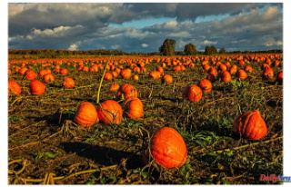 Northern Colorado Pumpkin Patch: Pick the Perfect...