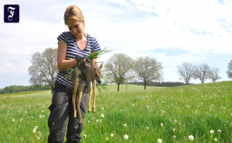 Animal rescue holiday in the Allgäu: drone searches fawn
