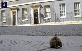 Animals conquer British cities: Ratmageddon in the Kingdom
