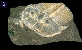 From the time before dinosaurs: 429-million-year-old eyes in trilobites-Fossil discovered