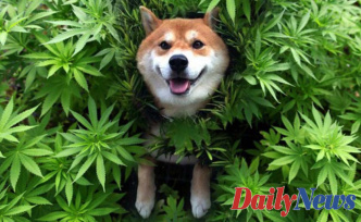 Does CBD have positive effects on pets?
