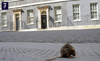 Animals conquer British cities: Ratmageddon in the Kingdom