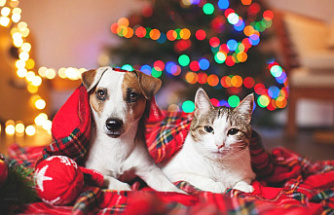4 Gifts Your Pet Will Love