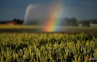 Italian wheat and rapeseed Plants in 2021 Preferred by Great weather