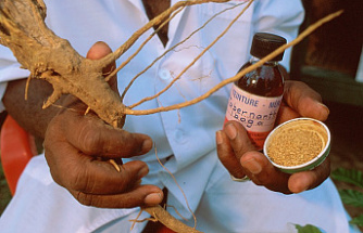 The Ultimate Guide to Ibogaine Therapy
