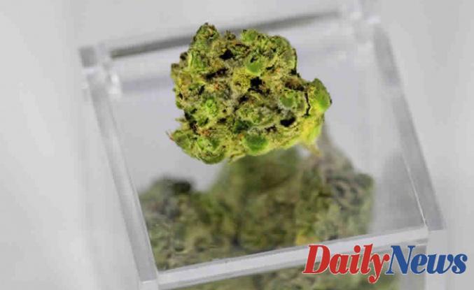 What is Medical Marijuana ?