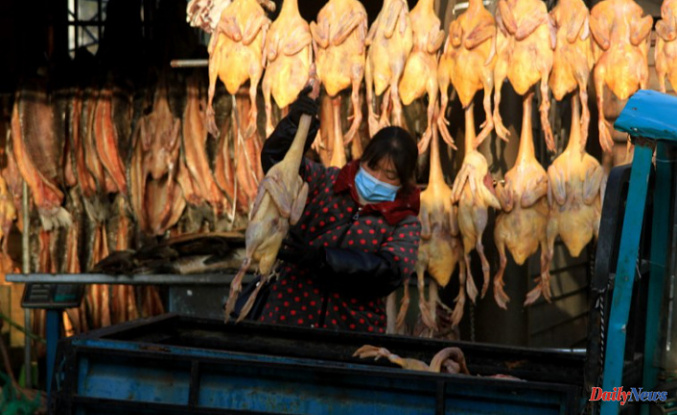 China Accounts 1st human case of H10N3 bird Influenza