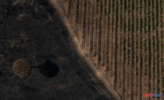 After French wildfire decimated grapevines, vintners are devastated